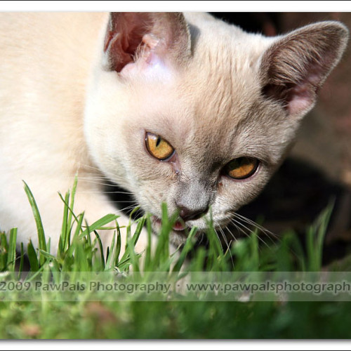 foxy-sydney-cat-photographer-7978