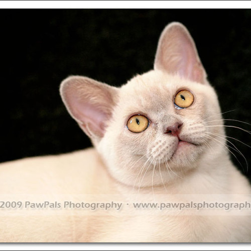 foxy-sydney-cat-photographer-8026