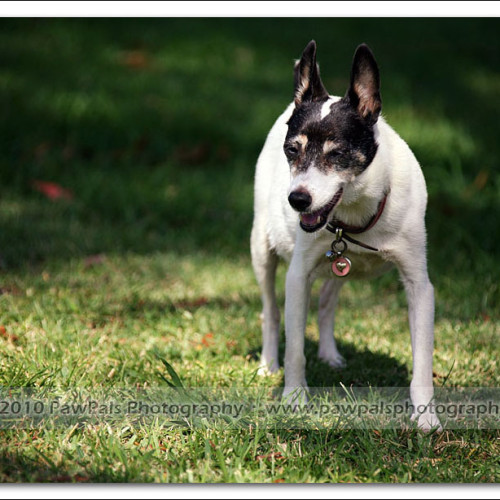 jazz-and-minnie-pet-photography-2743