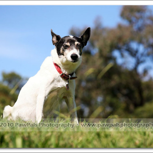 jazz-and-minnie-pet-photography-2775