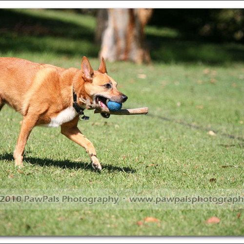 jazz-and-minnie-pet-photography-2821