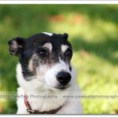 jazz-and-minnie-pet-photography-2852