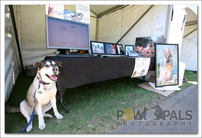 pawpals-bark-in-the-park-2012